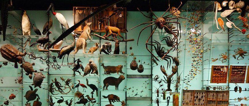 2020 NY Museum of Natural History Biodiversity Hall